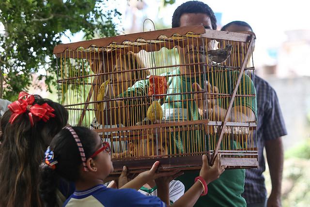 Campanha de Entrega Voluntária de Animais Silvestres acontece nesta sexta (22) em Gravatá