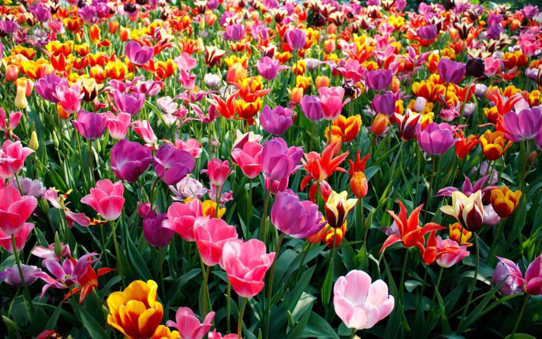 Primavera: Estação das Flores e da Moda