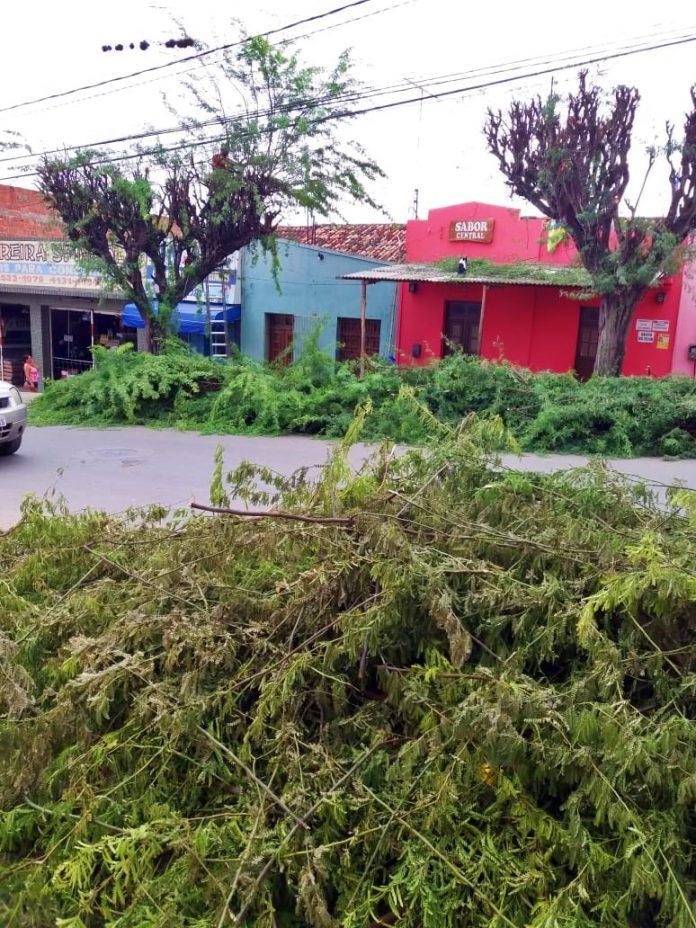 Padagem de Árvores na Amaury de Medeiros. Foto: Gilvan Silva
